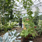 Residential greenhouse