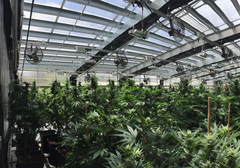 Solar Greenhouse Kits Ceres Greenhouse