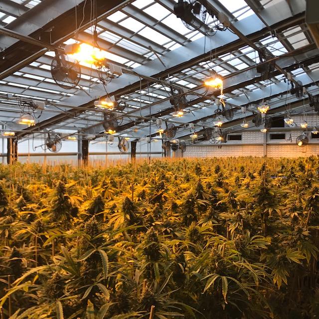 Light Dep Cannabis Greenhouse2 Copyright Ceres Greenhouse