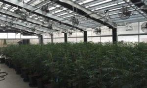 Energy-efficient Cannabis Greenhouse