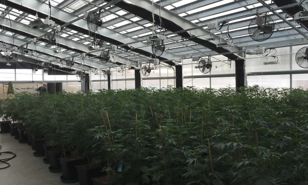 Energy Efficient Commercial Greenhouses Custom