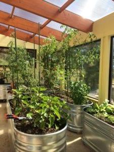 Abundant year-round greenhouse