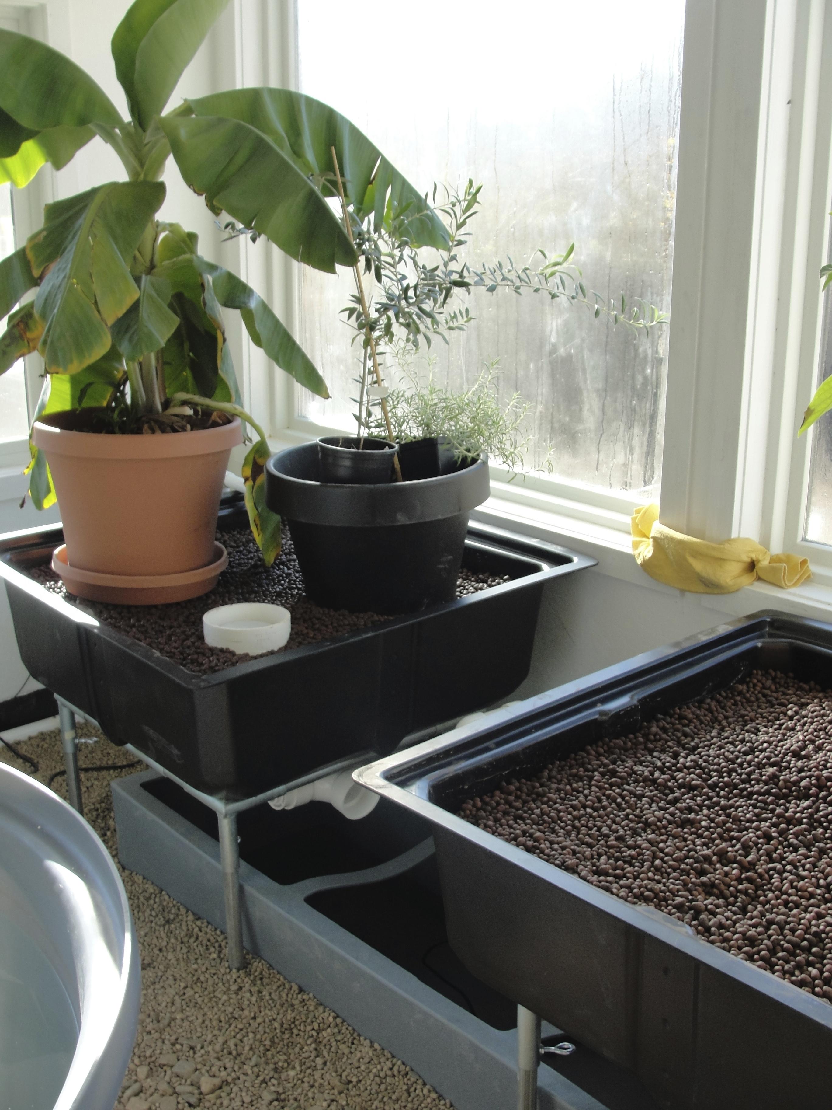 Aquaponics Greenhouse Design