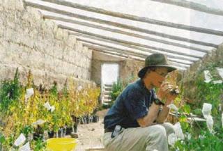walipini greenhouse design