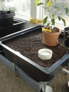 Aquaponics system in a greenhouse
