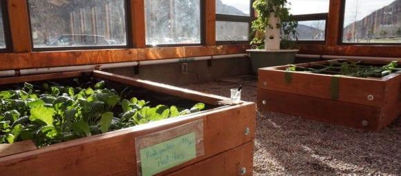 Raised beds in a custom school greenhouse