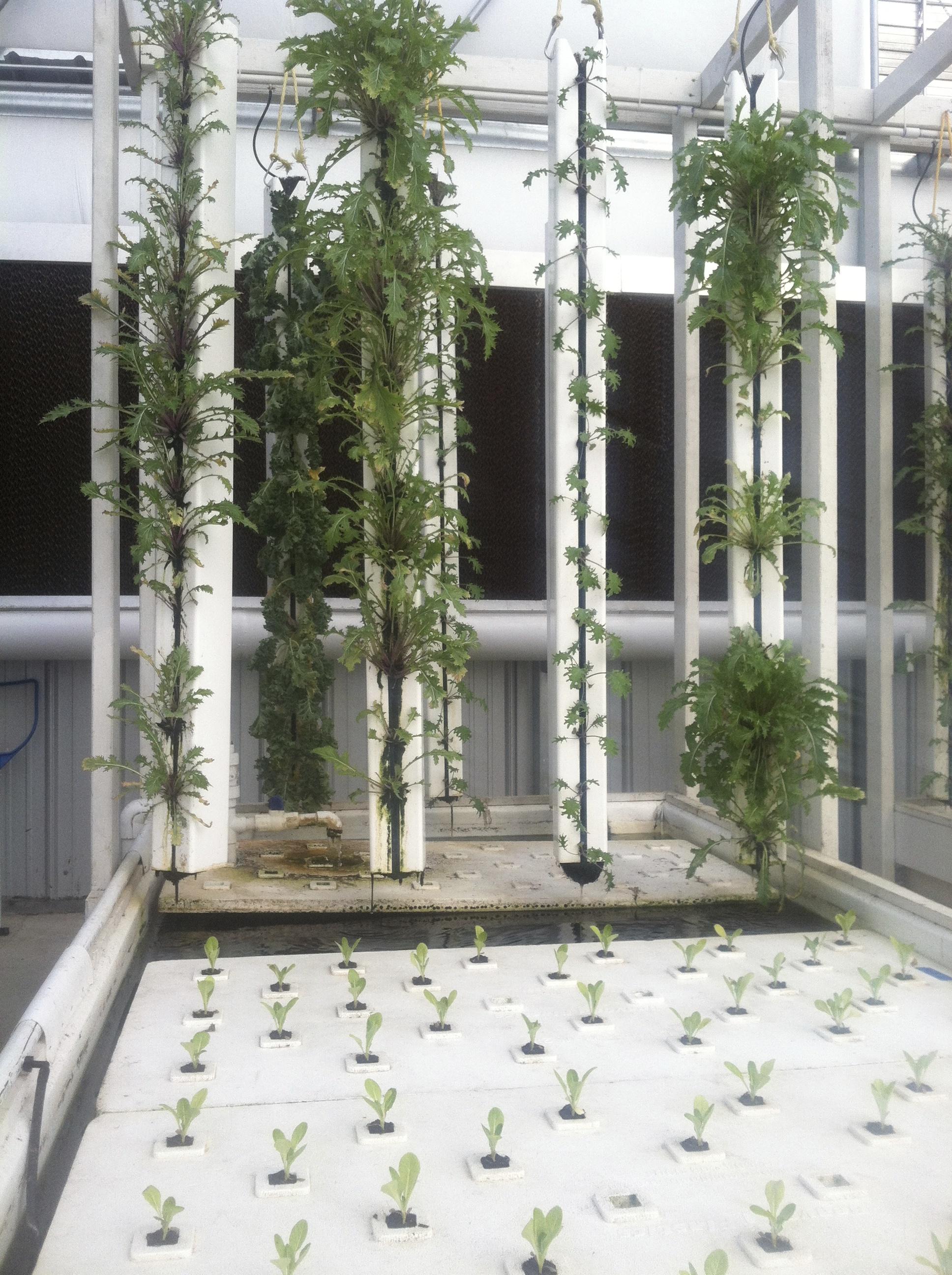 Aquaponic Greenhouse Designers
