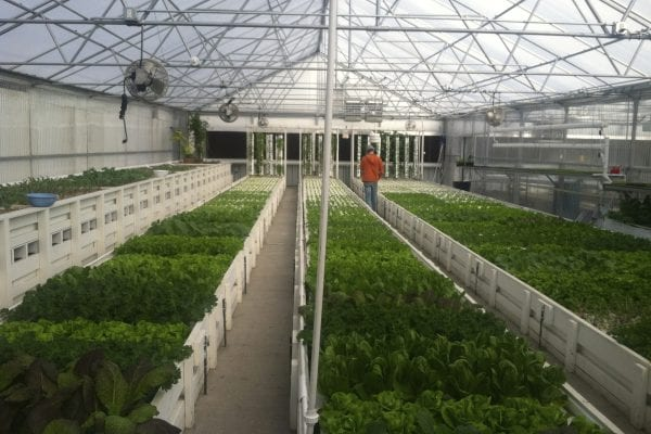 A Guide to Planning a Commercial Aquaponics Greenhouse