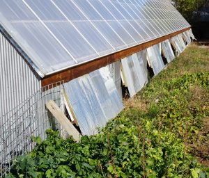 Passive solar vents in a commercial greenhouse