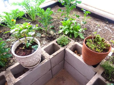 Easy Raised Bed Options for a Residential Greenhouse