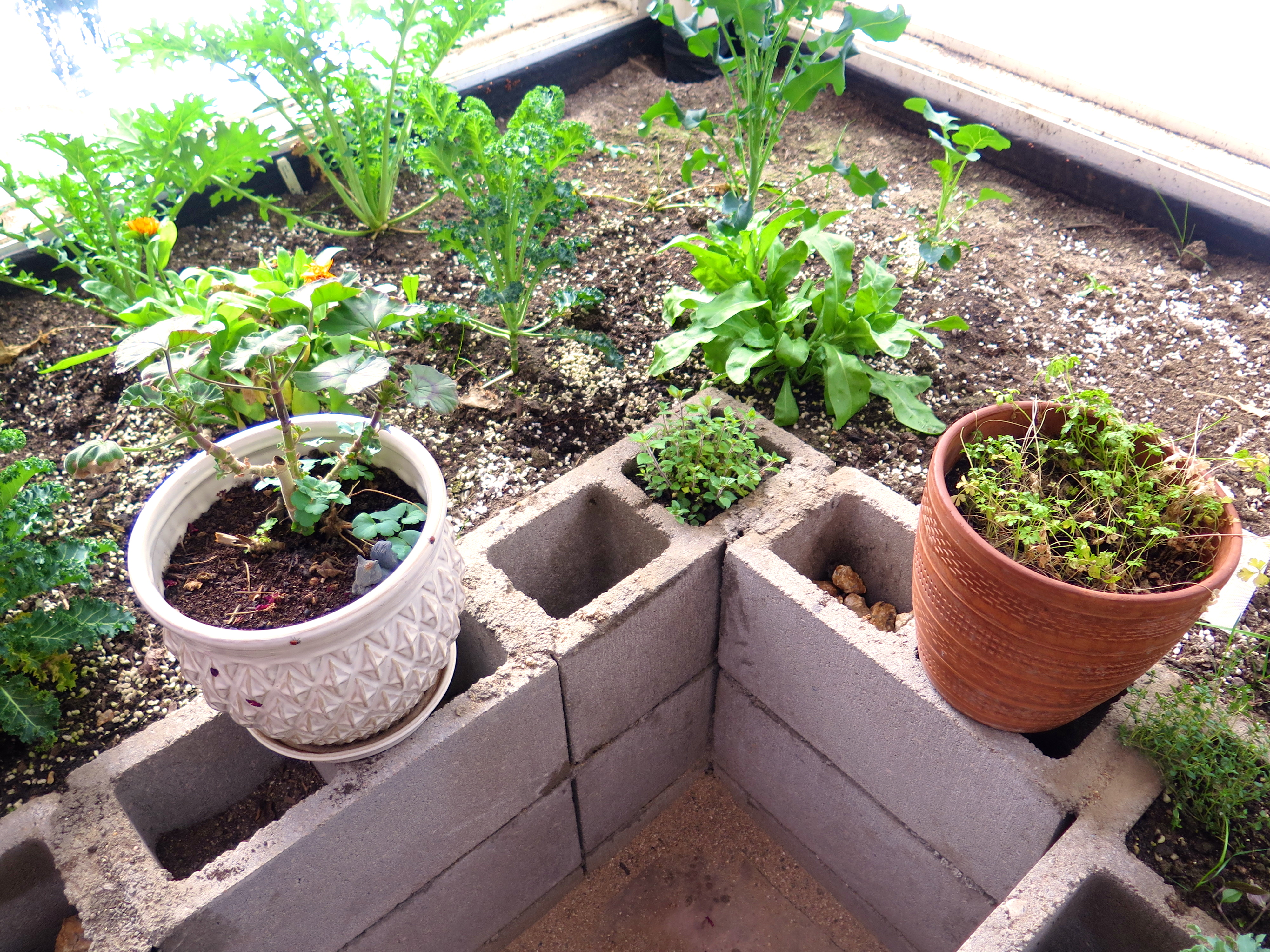 raised beds made out of cinder blocks in a ceres greenhouse