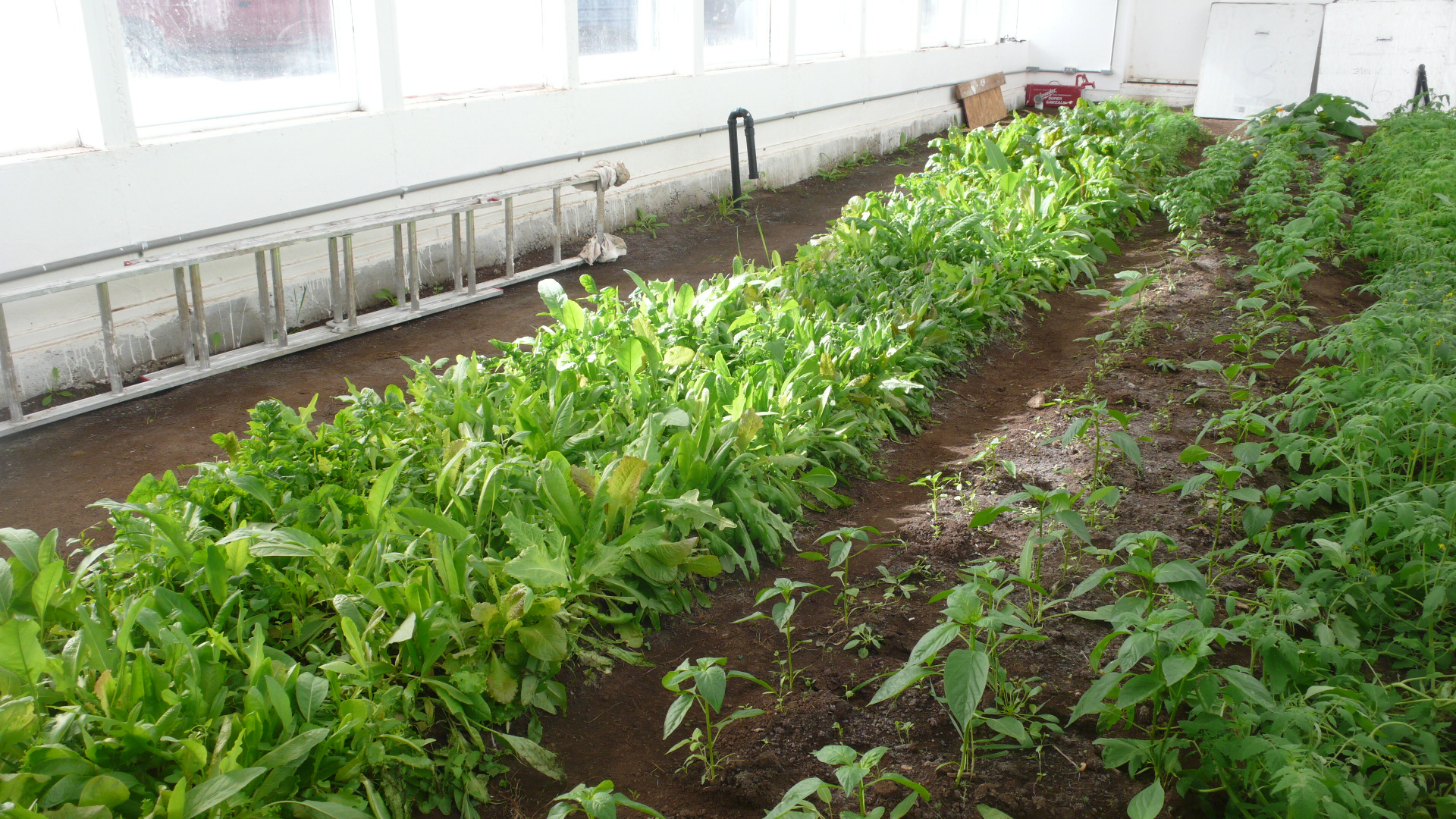3 Types Of Greenhouse Floors Ceres