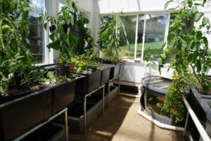 Aquaponic Greenhouse2_Ceres Greenhouse Solutions