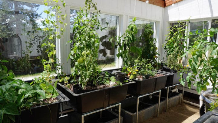 Year-Round Aquaponic Greenhouse_Ceres Greenhouses