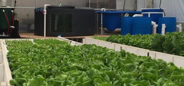 Commercial Aquaponics Greenhouse_Flourish farms