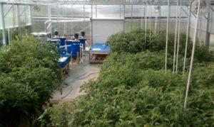 Year-Round Aquaponics Greenhouse at The Sage School, Idaho
