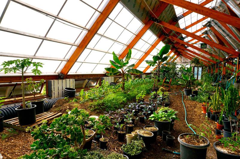 Tropical Greenhouse Golden Hoof Farm Ceres Greenhouse