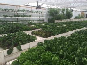 aquaponics greenhouse_flourish farms