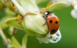 ladybug in a greenhouse