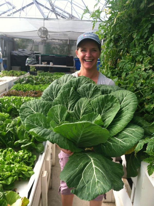 Collard Greens From Aquaponic Greenhouse Flourish Farms