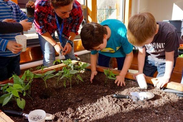 School Greenhouse growing