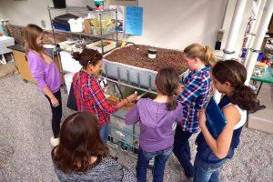 Aquaponics Greenhouse at Vail Mountain School