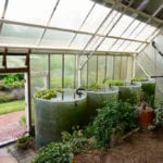 waterbarrelsgreenhouse