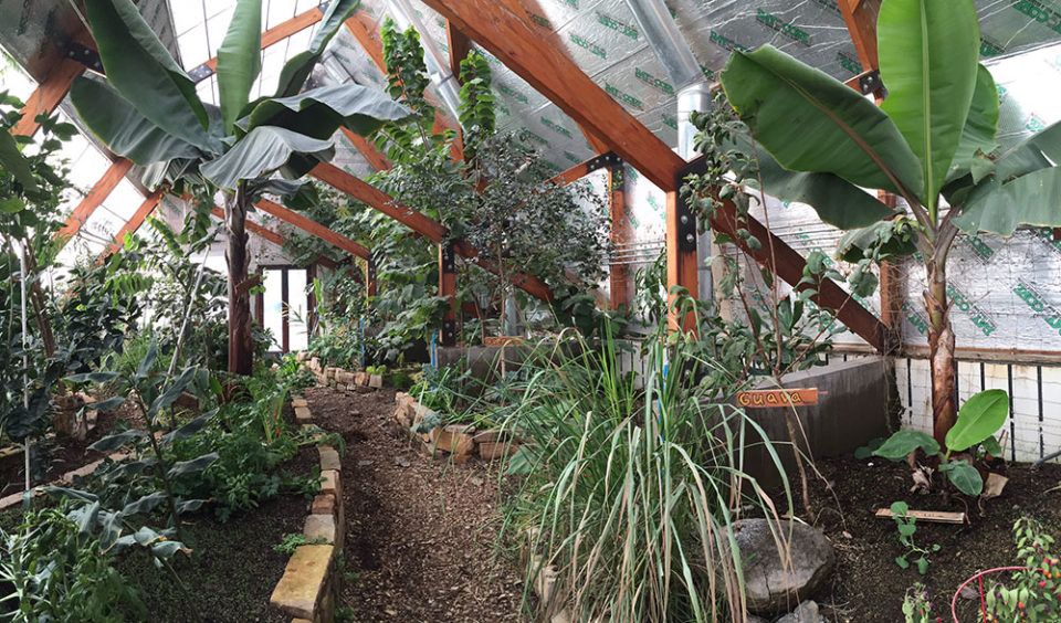 Growing Bananas Off-Grid: Tour of A Tropical Greenhouse in the Rocky Mountains