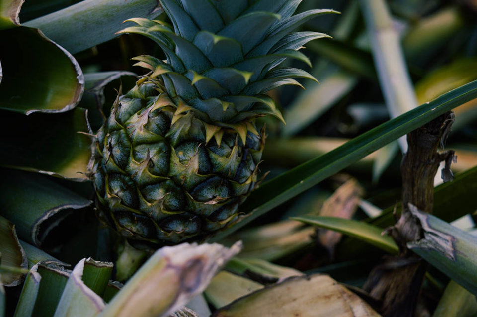 Pineapples, custom siding, self-wicking beds… a greenhouse comes to life