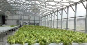 Canada greenhouse 2