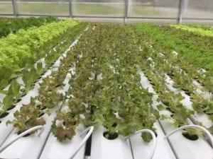 Canada greenhouse inside