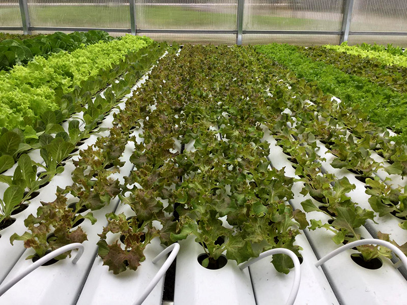 canada greenhouse