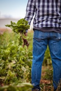 farmer picking beets