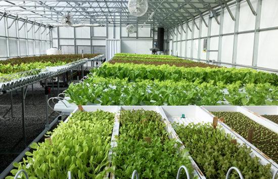 canada hydroponic greenhouse 2