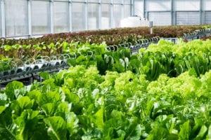 canada hydroponic greenhouse