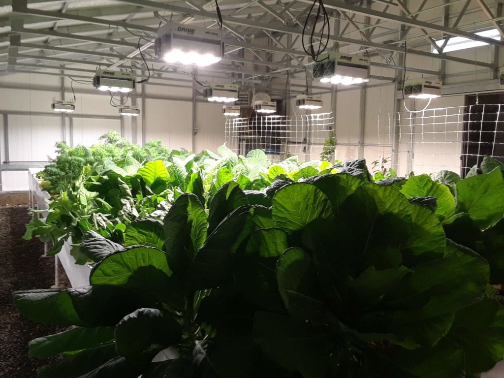 Ceres HighYield greenhouse inside-1