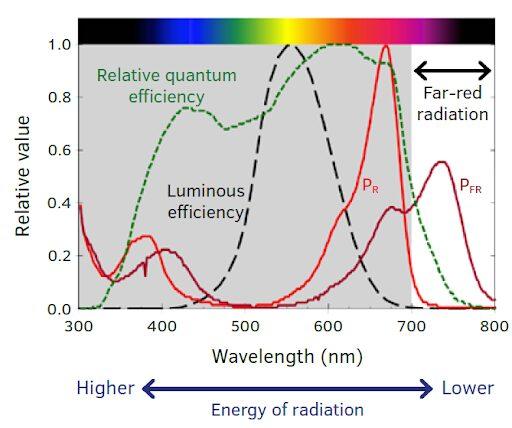 far-red radiation
