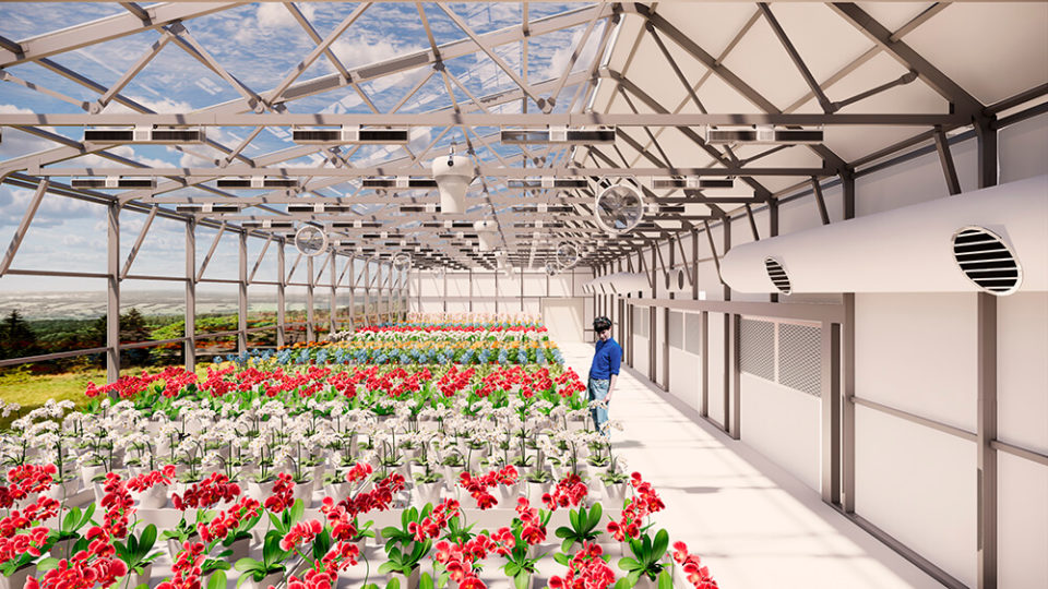 Growing Plants with Carbon Dioxide