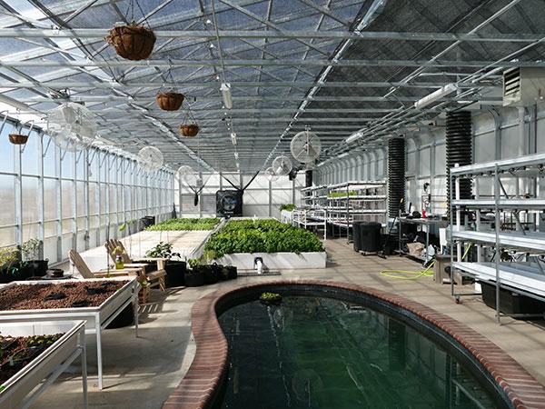 aquaponics greenhouse for sale- backyard aquaponic greenhouse